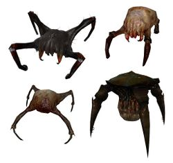 Headcrab models.jpg