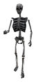 Dm skeleton.png
