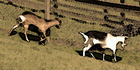 Glados screens goat002.png